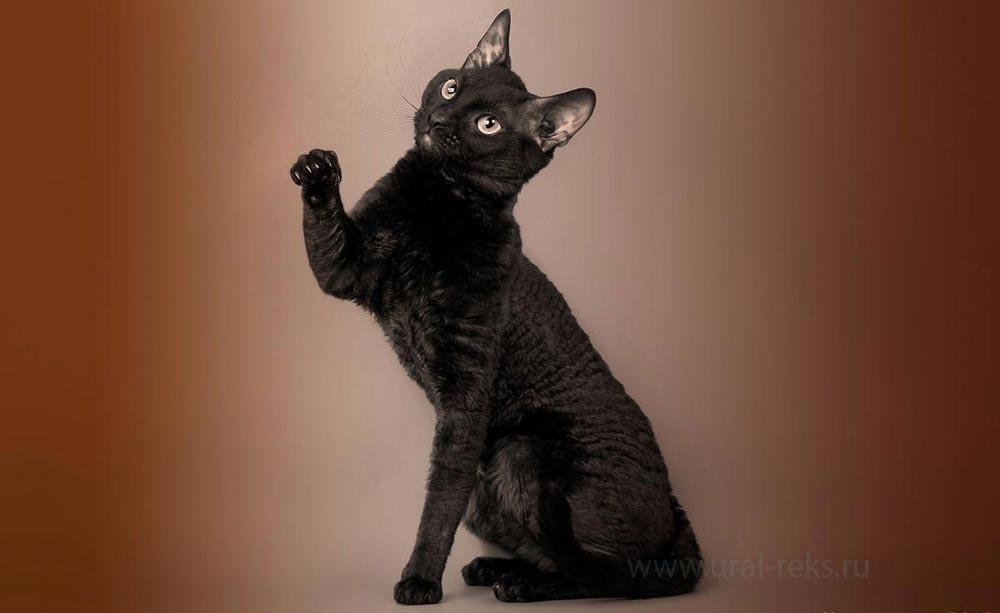 кошка много ласки