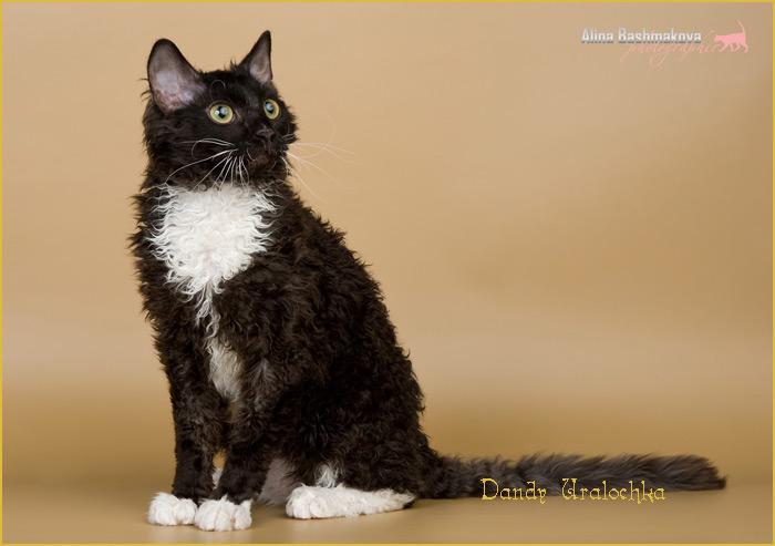 питомник кошек породы