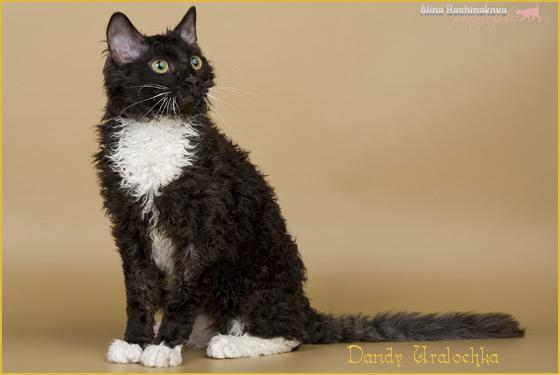неаллергенная порода кошек уральский рекс