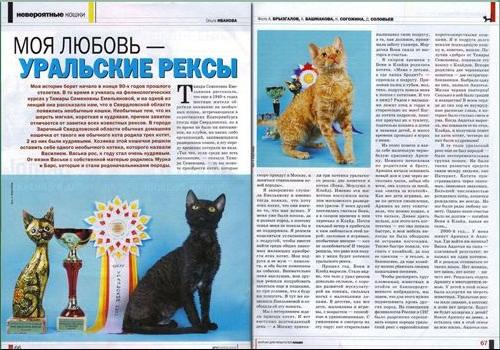 отзывы владельцев о кошках уральский рек