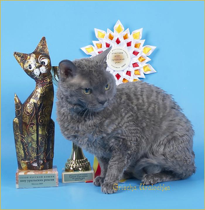 купить котёнка в москве
