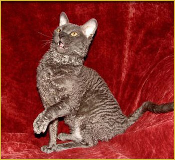 москва котенок