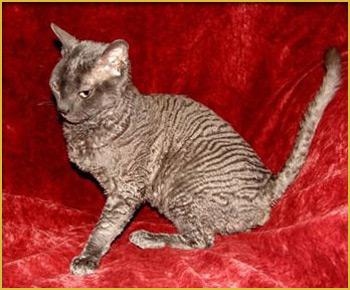 котенок питомник