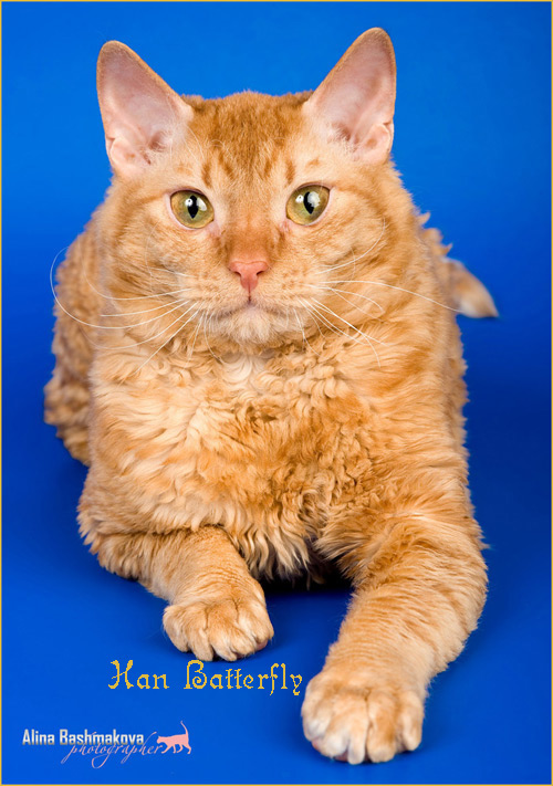 кошка москва питомник уралочка