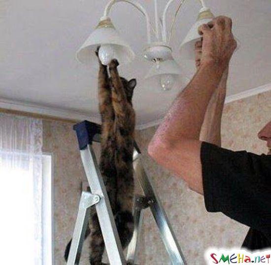 Кошкотерапия. Лечение кошками.