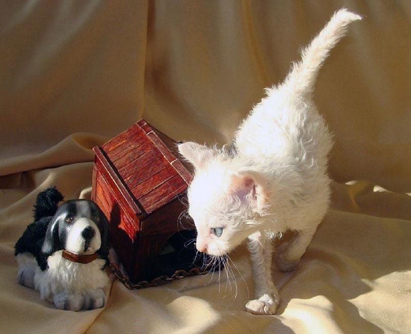 порода белых кошек купить