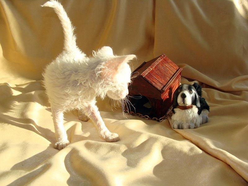 белая кошка купить недорого