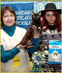 Уральский рекс. Питомник кошек Уралочка
