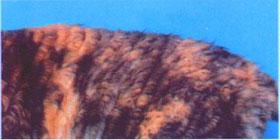 Породы кошек питомник