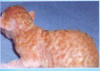 Породы кошек в москве