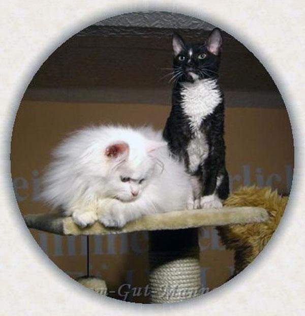 лучшие кошки питомник