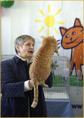 москва питомник котята кошка