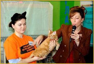 русская порода кошек купить