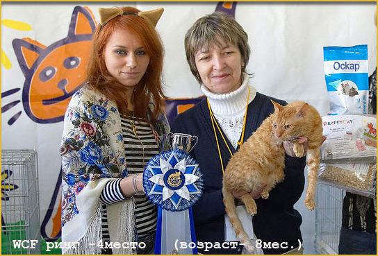 кот кошка москва недорого