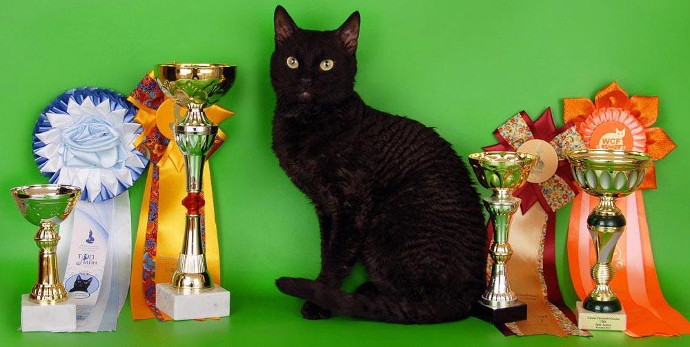 Отзывы владельцев котят породы уральский рекс