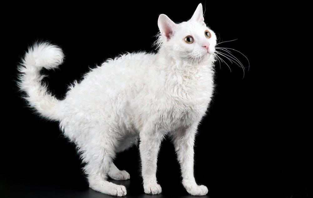 кошка не вызывающая аллергию