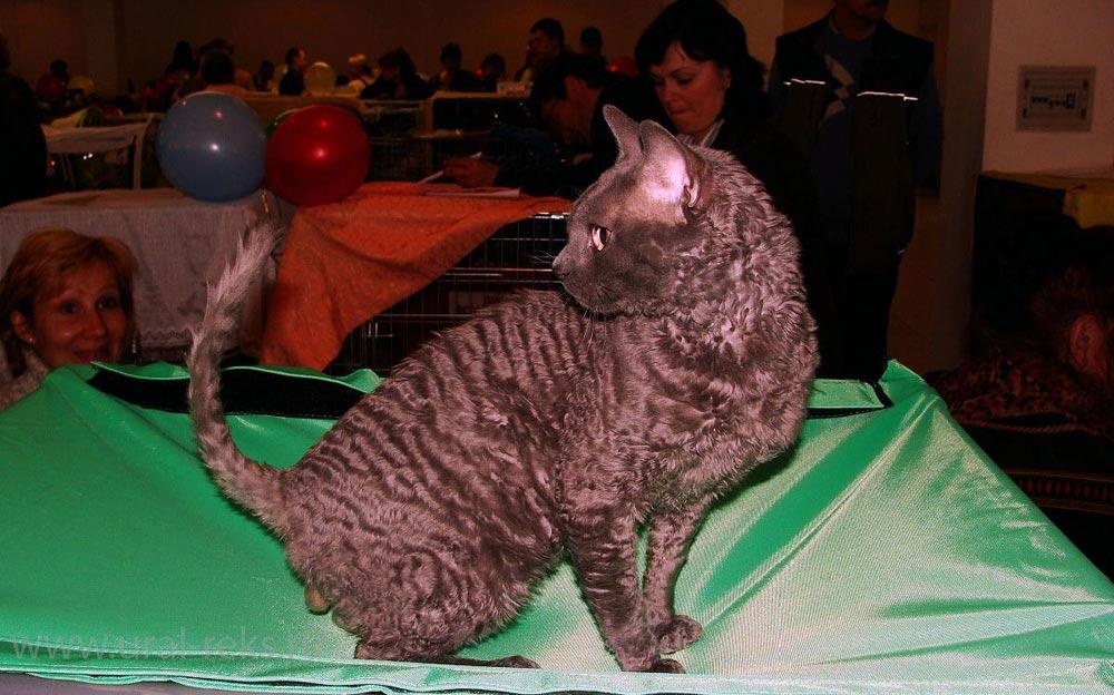 москва котёнок