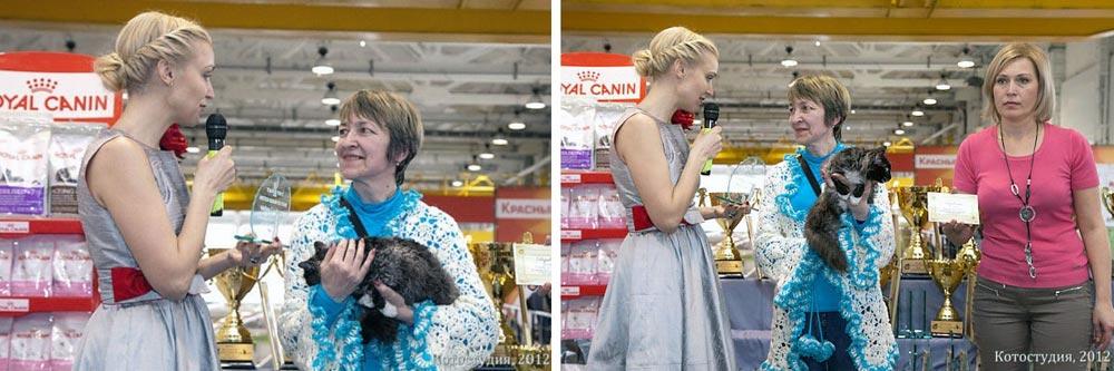 кошки купить Москва