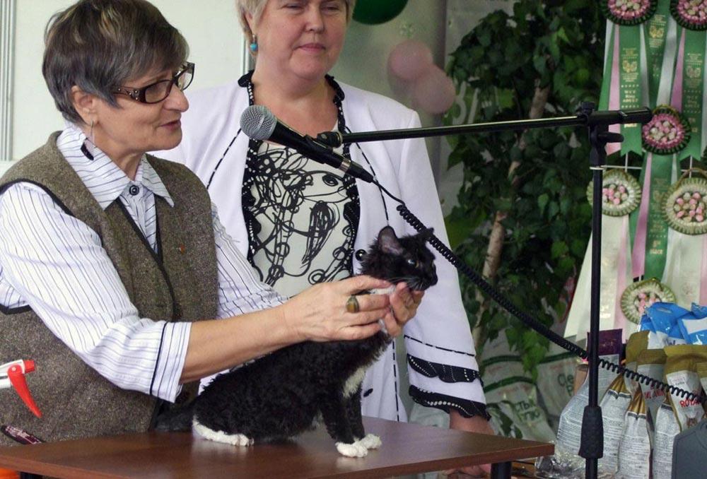 кошки в Москве купить котят недорого