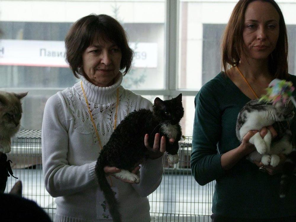 питомники кошек в Москве продажа котят