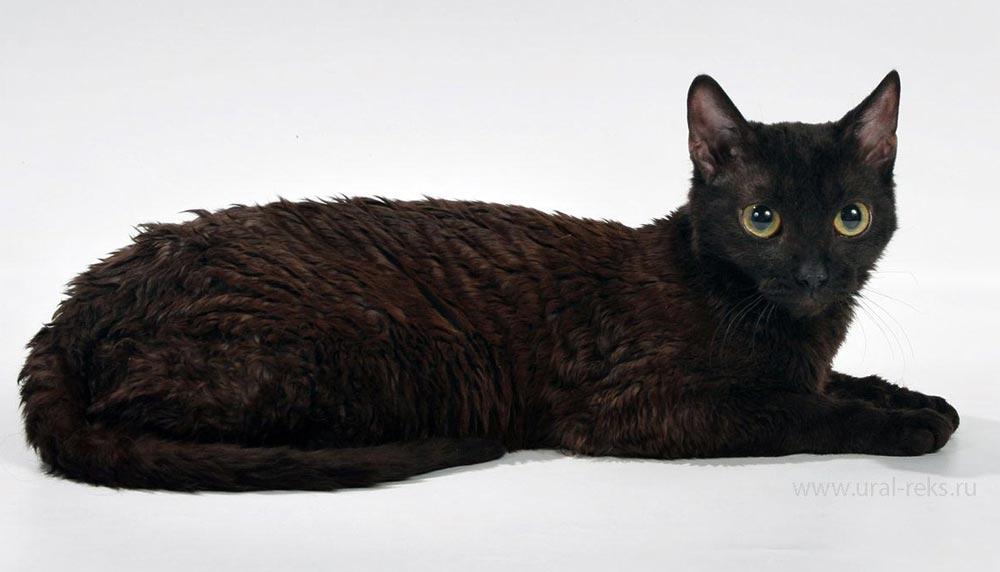 неаллергичные кошки