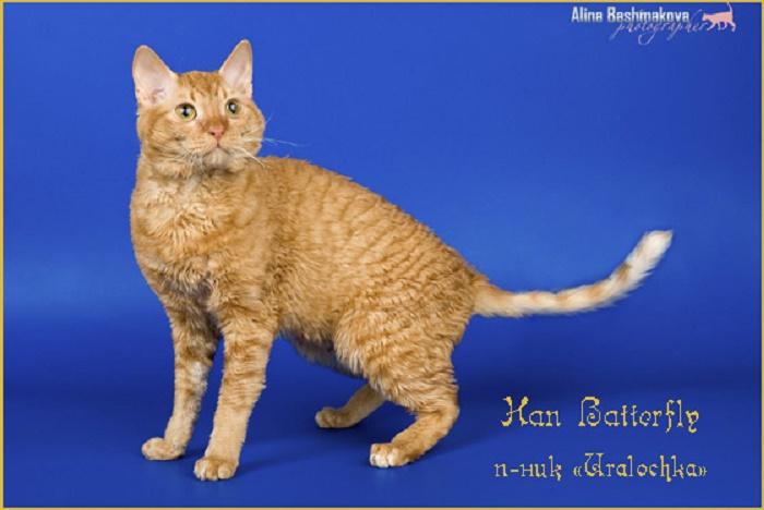 недорого продажа породистых котят