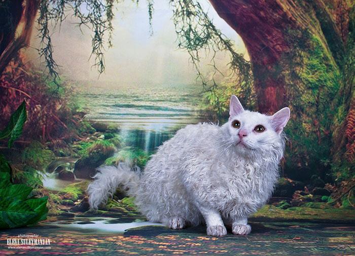 купить котёнка породы белых кошек