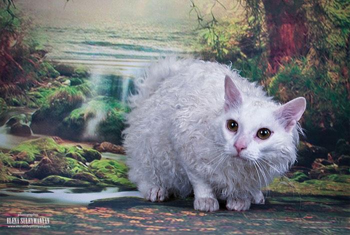 купить белого котёнка