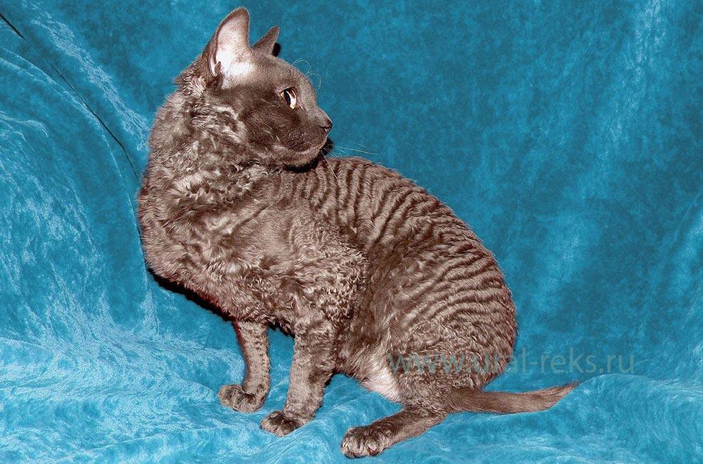 описание пород кошек