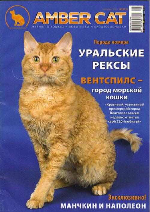 порода кошек описание характера