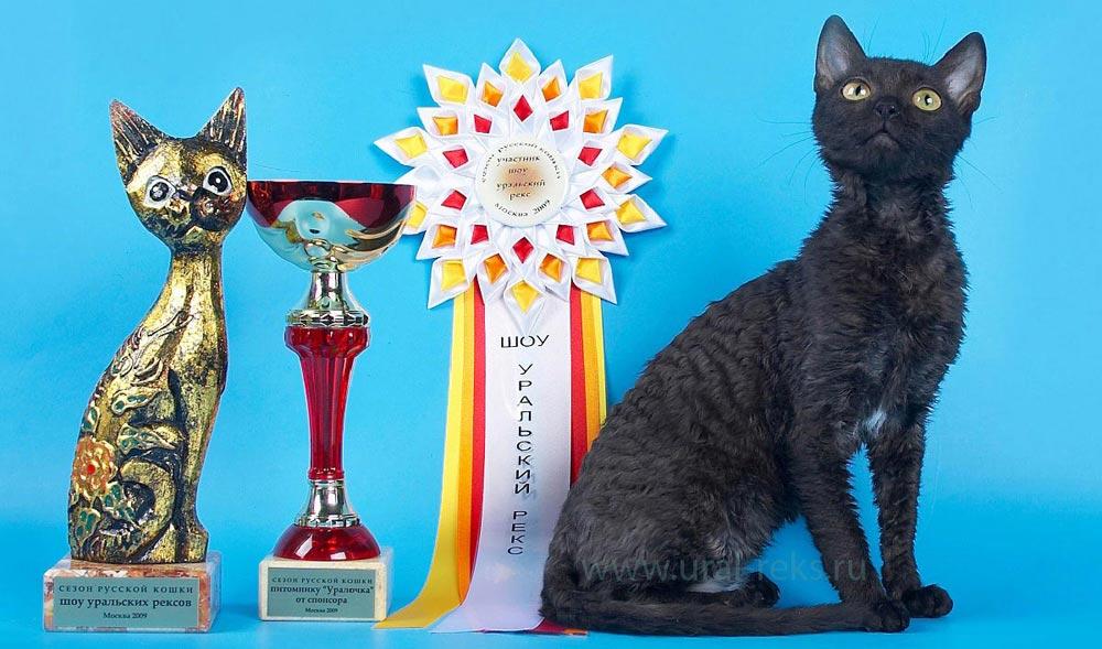 породы кошек название и описание