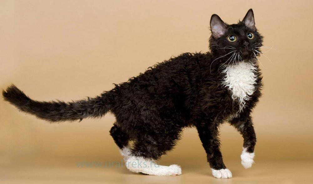 породы кошек описание характера